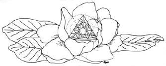 Arcana Rose